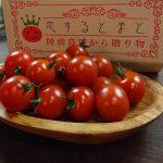 恋するトマト